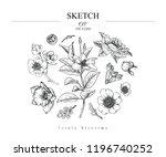 sketch floral botany set.... | Shutterstock .eps vector #1196740252