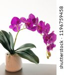 purple orchid in pot on white... | Shutterstock . vector #1196759458