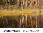 reflection of autumn forest in...   Shutterstock . vector #1196782645