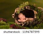 newborn baby sleeping in a cork ... | Shutterstock . vector #1196787595