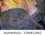 rings of a wooden trunk create... | Shutterstock . vector #1196812462