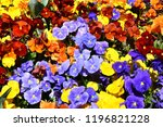 close up of multicolour  blue ...   Shutterstock . vector #1196821228