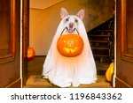 dog sitting as a ghost for... | Shutterstock . vector #1196843362