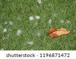 Hail Storm In Grass
