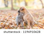 Stock photo kitten pressed against the homeless puppy on autumn leaves 1196910628