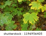 autumn leaves in the park | Shutterstock . vector #1196956405