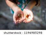 child with acorn | Shutterstock . vector #1196985298