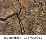 growth rings on a felled tree... | Shutterstock . vector #1197019012