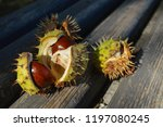 Chestnuts Fell Directly On A...