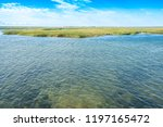national seashore in cape cod... | Shutterstock . vector #1197165472