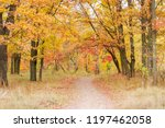 footpath in forest among of the ... | Shutterstock . vector #1197462058