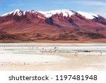 pink flamingos on the celeste... | Shutterstock . vector #1197481948