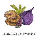 elegant detailed natural... | Shutterstock .eps vector #1197603385