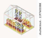 vegetables growing in boxes... | Shutterstock .eps vector #1197603388