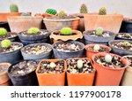 a wide view of various species  ... | Shutterstock . vector #1197900178