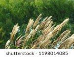 ...   Shutterstock . vector #1198014085