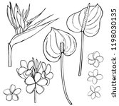hand  drawn tropical flowers....   Shutterstock .eps vector #1198030135