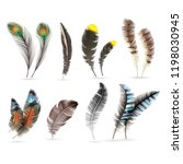 realistic bird feathers.... | Shutterstock .eps vector #1198030945