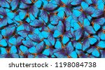 Wings Of A Butterfly Morpho....