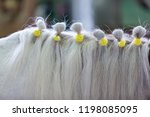 horse fashionable hairstyle on... | Shutterstock . vector #1198085095