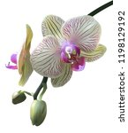 realistic green orchids and... | Shutterstock .eps vector #1198129192
