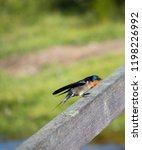 a pretty  dainty delightful ... | Shutterstock . vector #1198226992