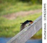a pretty  dainty delightful ... | Shutterstock . vector #1198226995