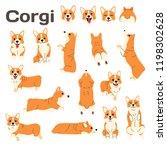 corgi illustration dog poses...   Shutterstock .eps vector #1198302628