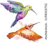 sky bird colorful colibri in a... | Shutterstock . vector #1198310752