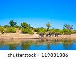 group of elephants walking... | Shutterstock . vector #119831386