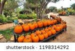 Texas Pumpkin Display
