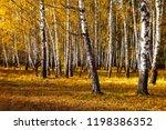 beautiful autumn birch grove on ... | Shutterstock . vector #1198386352