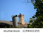 a dove sits on a stone chimney  ... | Shutterstock . vector #1198431355