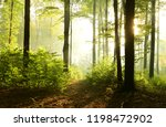 sunny morning in the forest | Shutterstock . vector #1198472902
