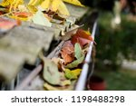 Leaves in eaves. cleaning...