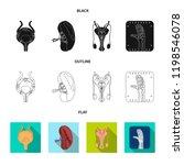 vector design of body and human ... | Shutterstock .eps vector #1198546078