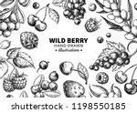 Wild Berry Drawing. Hand Drawn...