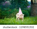 pink piggy wearing pink festive ... | Shutterstock . vector #1198551532