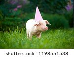 view of cute little pink piggy... | Shutterstock . vector #1198551538