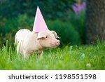 view of cute little pink piggy... | Shutterstock . vector #1198551598