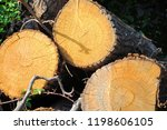 pile of tree trunks cut in... | Shutterstock . vector #1198606105