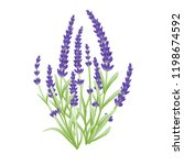 lavender flowers vector | Shutterstock .eps vector #1198674592