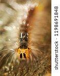 shaggy caterpillar close up.... | Shutterstock . vector #1198691848