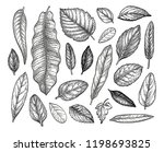 leaves collection. ink sketch... | Shutterstock .eps vector #1198693825