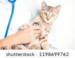 unrecognizable woman doctor... | Shutterstock . vector #1198699762
