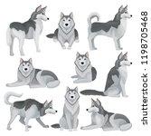 flat vector set of siberian... | Shutterstock .eps vector #1198705468