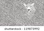 jaguar skin background... | Shutterstock .eps vector #119873992