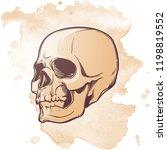 human skull hand drawing. three ...   Shutterstock .eps vector #1198819552