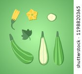 set of paper cut zucchini....   Shutterstock .eps vector #1198820365