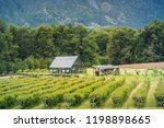greenhouse at patagonia  chile.  | Shutterstock . vector #1198898665